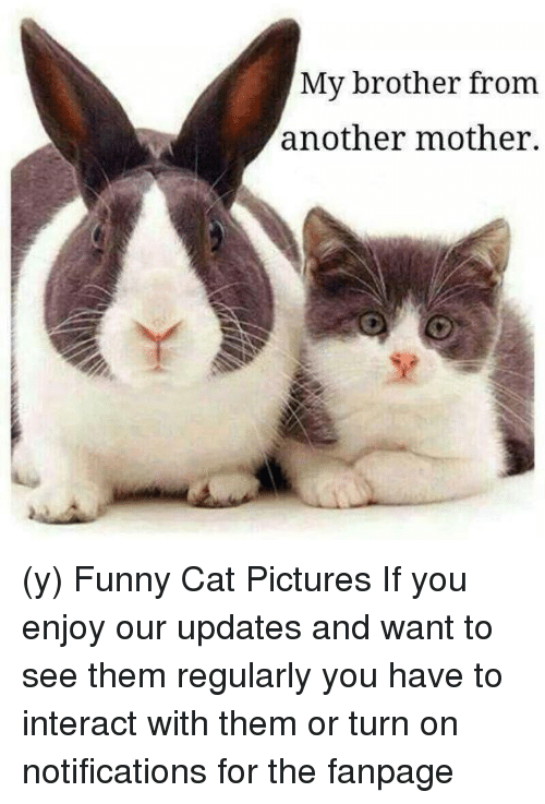 Memes, Pictures, and Mothers: My brother from  another mother. (y) Funny Cat Pictures If you enjoy our updates and want to see them regularly you have to interact with them or turn on notifications for the fanpage