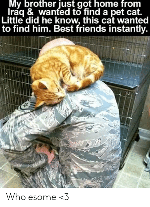Find Him: My brother just got home from  Iraq & wanted to find a pet cat.  Little did he know, this cat wanted  to find him. Best friends instantly. Wholesome <3