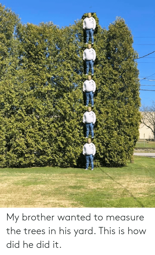 Trees: My brother wanted to measure the trees in his yard. This is how did he did it.
