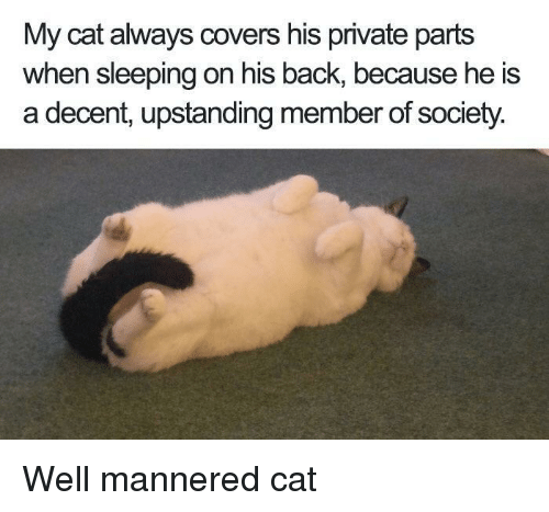 Covers, Sleeping, and Back: My cat always covers his private parts  when sleeping on his back, because he is  a decent, upstanding member of society. Well mannered cat