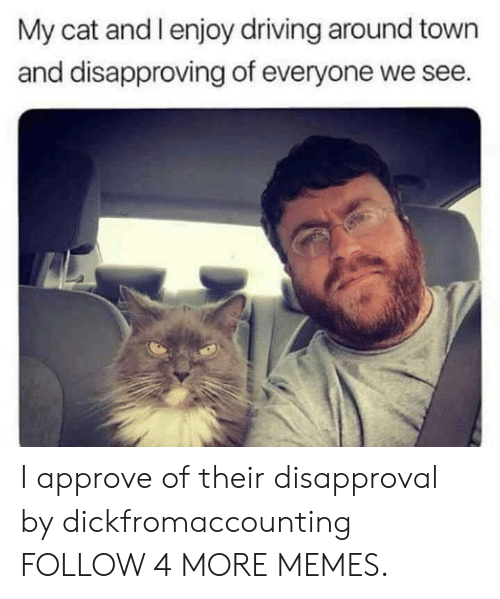 Disapproval: My cat and l enjoy driving around town  and disapproving of everyone we see. I approve of their disapproval by dickfromaccounting FOLLOW 4 MORE MEMES.
