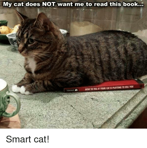 Smart Cat: My cat does NOT want me to read this book... Smart cat!