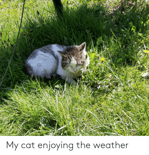 The Weather: My cat enjoying the weather