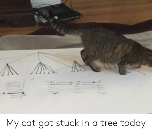Today, Tree, and Got: My cat got stuck in a tree today