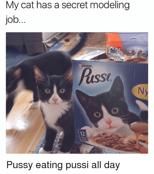 Opness: My cat has a secret modeling  job  PURINA  Puss  12  Pasar  Op Pussy eating pussi all day
