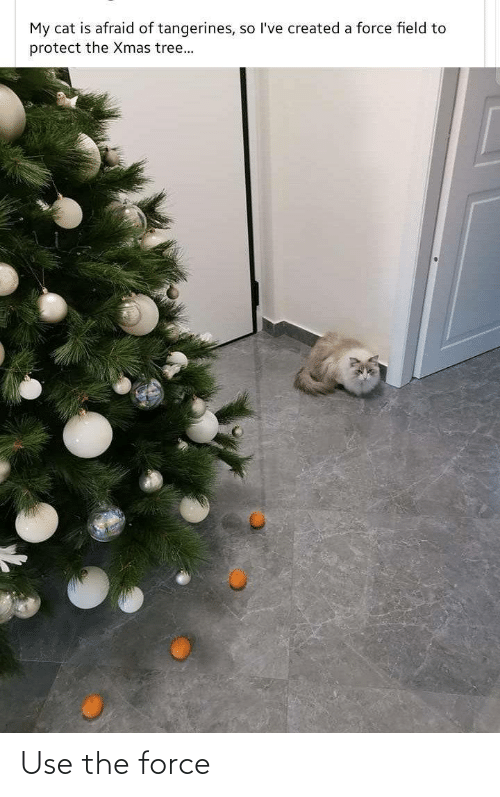 the force: My cat is afraid of tangerines, so l've created a force field to  protect the Xmas tree... Use the force