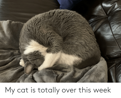 over-this: My cat is totally over this week