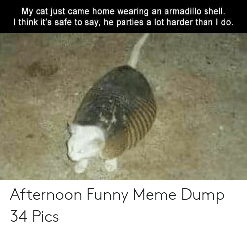 funny meme: My cat just came home wearing an armadillo shell.  I think it's safe to say, he parties a lot harder than I do. Afternoon Funny Meme Dump 34 Pics