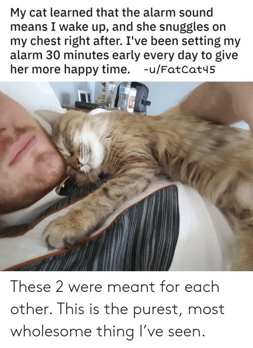 snuggles: My cat learned that the alarm sound  means I wake up, and she snuggles on  my chest right after. I've been setting my  alarm 30 minutes early every day to give  her more happy time. -u/FatCat45 These 2 were meant for each other. This is the purest, most wholesome thing I've seen.