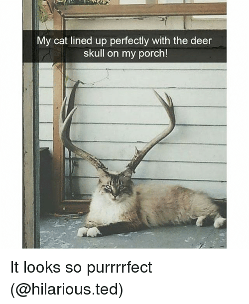 Deer, Funny, and Ted: My cat lined up perfectly with the deer  skull on my porch! It looks so purrrrfect (@hilarious.ted)