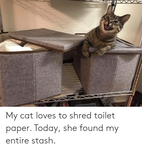 Today, Cat, and Paper: My cat loves to shred toilet paper. Today, she found my entire stash.