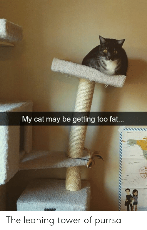 tower: My cat may be getting too fat...  MIno The leaning tower of purrsa