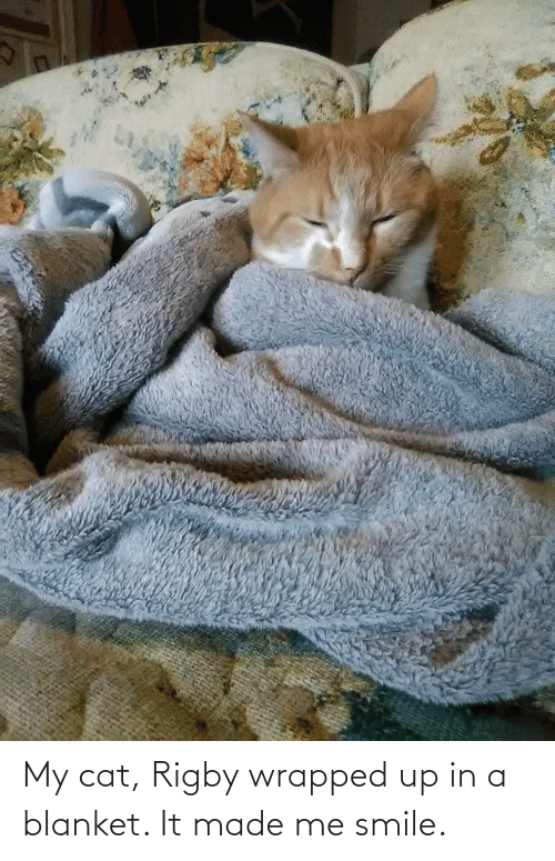rigby: My cat, Rigby wrapped up in a blanket. It made me smile.
