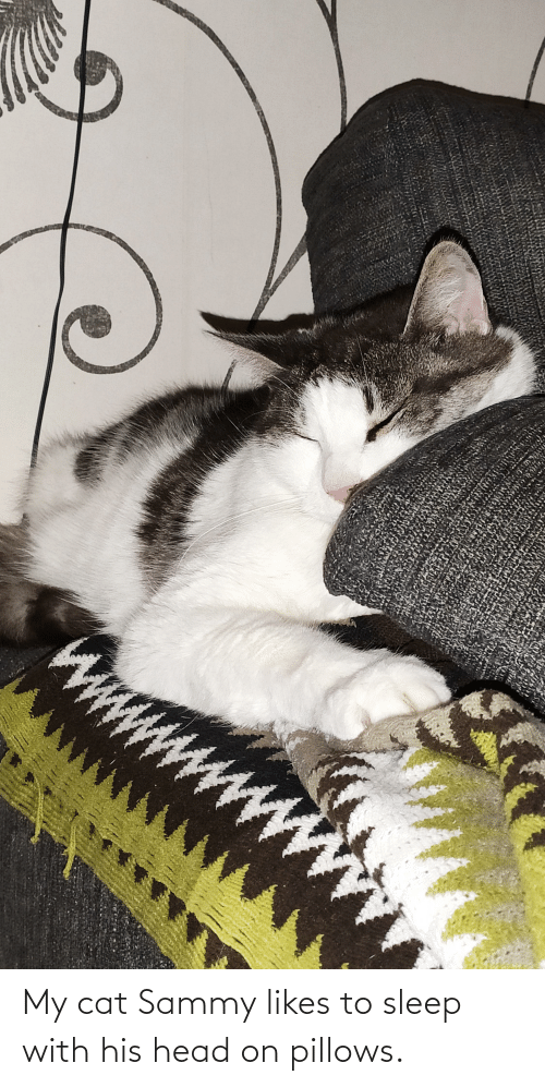 pillows: My cat Sammy likes to sleep with his head on pillows.