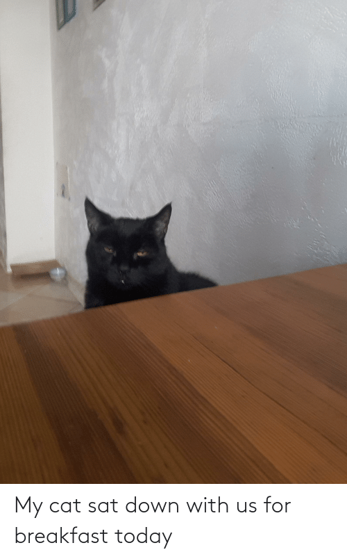 sat: My cat sat down with us for breakfast today