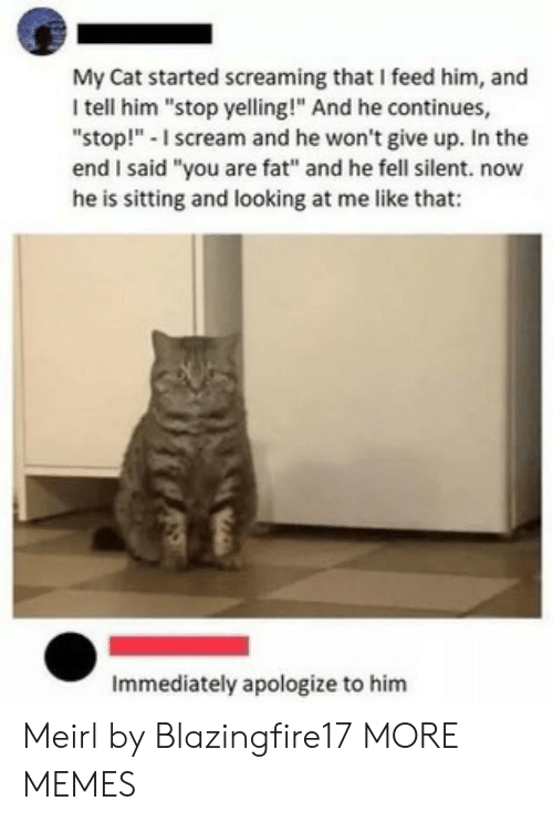 "Dank, Memes, and Scream: My Cat started screaming that I feed him, and  I tell him ""stop yelling!"" And he continues,  ""stop!""-I scream and he won't give up. In the  end I said ""you are fat"" and he fell silent. now  he is sitting and looking at me like that:  Immediately apologize to him Meirl by Blazingfire17 MORE MEMES"