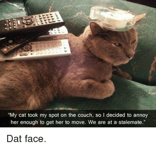 """dat face: """"My cat took my spot on the couch, so l decided to annoy  her enough to get her to move. We are at a stalemate."""" Dat face."""
