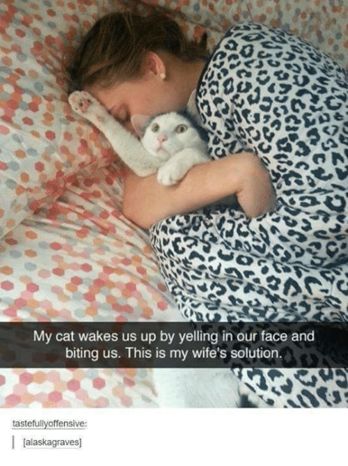Memes, 🤖, and Cat: My cat wakes us up by yelling in our face and  biting us. This is my wife's solution.  tastefullyoffensive:  Jalaskagraves