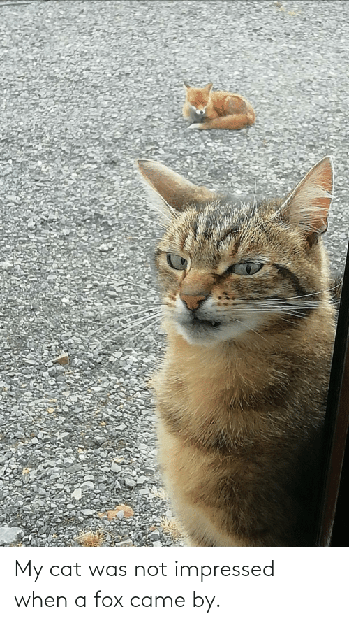 came: My cat was not impressed when a fox came by.