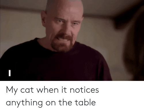 Reactiongifs, Cat, and Table: My cat when it notices anything on the table