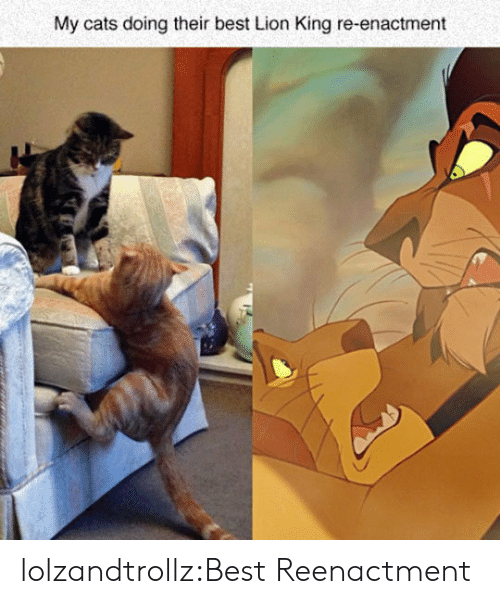 Cats, Tumblr, and Best: My cats doing their best Lion King re-enactment lolzandtrollz:Best Reenactment