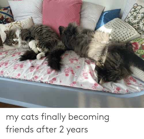 Aww Memes: my cats finally becoming friends after 2 years
