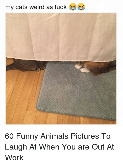 Funny animals: my cats weird as fuck 60 Funny Animals Pictures To Laugh At When You are Out At Work
