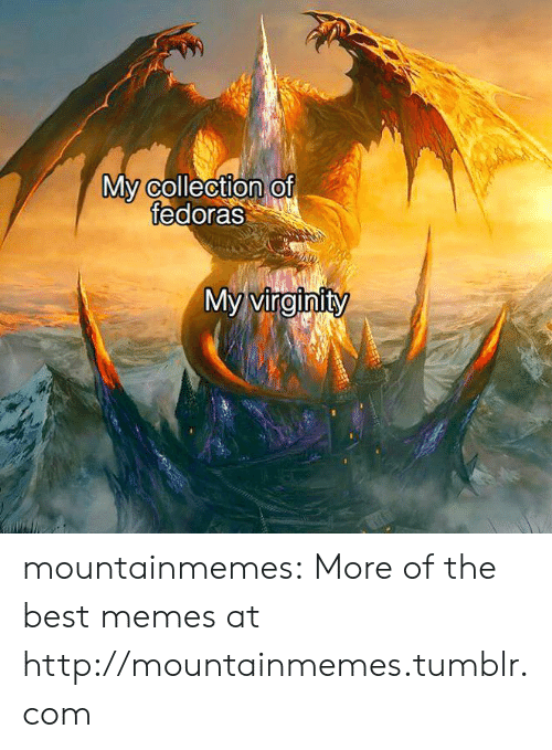 Memes, Tumblr, and Best: My collection of  fedoras  My virginity mountainmemes:  More of the best memes at http://mountainmemes.tumblr.com