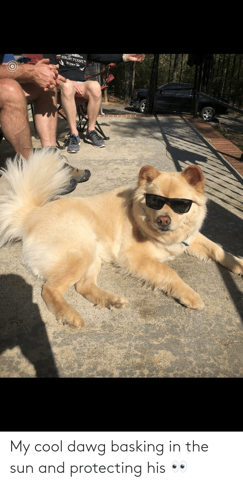protecting: My cool dawg basking in the sun and protecting his 👀