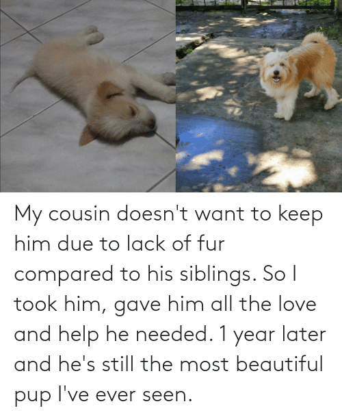 fur: My cousin doesn't want to keep him due to lack of fur compared to his siblings. So I took him, gave him all the love and help he needed. 1 year later and he's still the most beautiful pup I've ever seen.