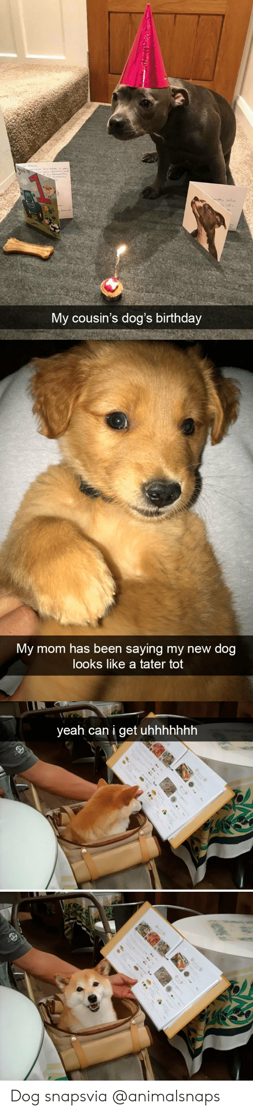 New Dog: My cousin's dog's birthday   My mom has been saying my new dog  looks like a tater tot   yeah can i get uhhhhhhh Dog snapsvia @animalsnaps