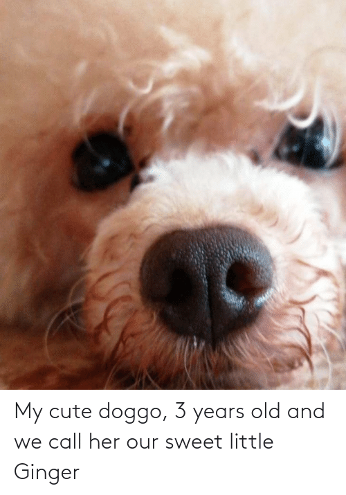 ginger: My cute doggo, 3 years old and we call her our sweet little Ginger