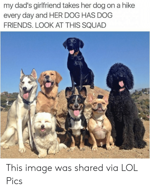 Dog Has: my dad's girlfriend takes her dog on a hike  every day and HER DOG HAS DOG  FRIENDS. LOOK AT THIS SQUAD This image was shared via LOL Pics
