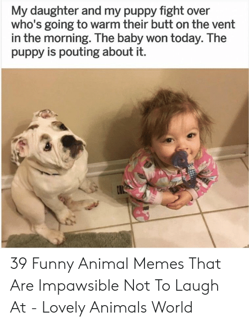 funny animal memes: My daughter and my puppy fight over  who's going to warm their butt on the vent  in the morning. The baby won today. The  puppy is pouting about it. 39 Funny Animal Memes That Are Impawsible Not To Laugh At - Lovely Animals World