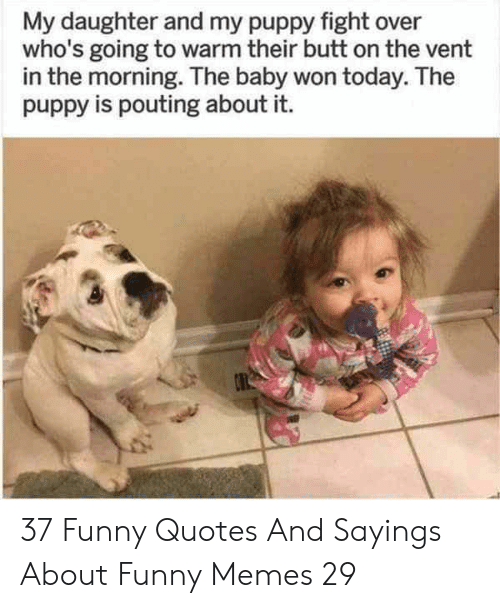 Butt, Funny, and Memes: My daughter and my puppy fight over  who's going to warm their butt on the vent  in the morning. The baby won today. The  puppy is pouting about it. 37 Funny Quotes And Sayings About Funny Memes 29