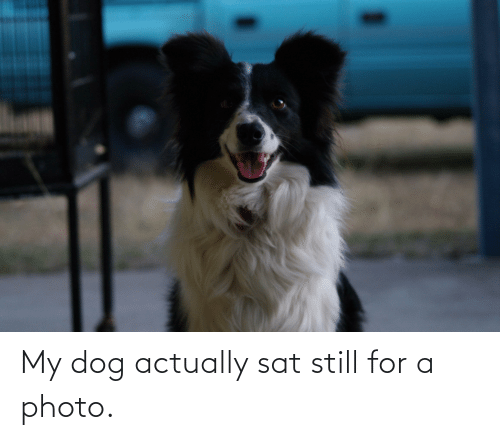 sat: My dog actually sat still for a photo.