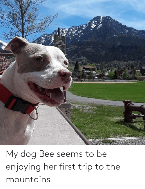 enjoying: My dog Bee seems to be enjoying her first trip to the mountains