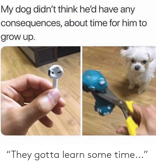 "Memes, Time, and 🤖: My dog didn't think he'd have any  consequences, about time for him to  grow up. ""They gotta learn some time..."""