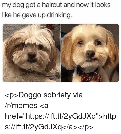 "Drinking, Haircut, and Memes: my dog got a haircut and now it looks  like he gave up drinking. <p>Doggo sobriety via /r/memes <a href=""https://ift.tt/2yGdJXq"">https://ift.tt/2yGdJXq</a></p>"