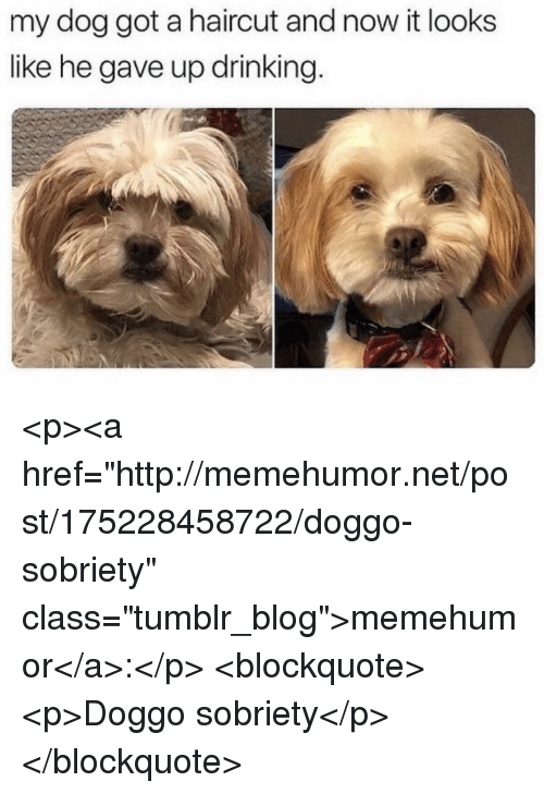 "Drinking, Haircut, and Tumblr: my dog got a haircut and now it looks  like he gave up drinking. <p><a href=""http://memehumor.net/post/175228458722/doggo-sobriety"" class=""tumblr_blog"">memehumor</a>:</p>  <blockquote><p>Doggo sobriety</p></blockquote>"