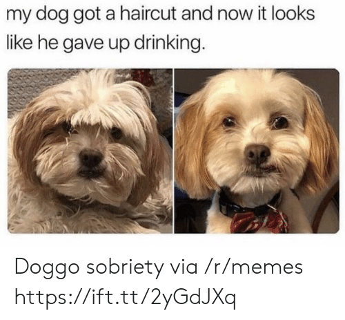 Sobriety: my dog got a haircut and now it looks  like he gave up drinking. Doggo sobriety via /r/memes https://ift.tt/2yGdJXq