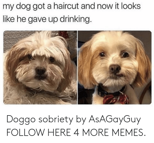 Sobriety: my dog got a haircut and now it looks  like he gave up drinking. Doggo sobriety by AsAGayGuy FOLLOW HERE 4 MORE MEMES.