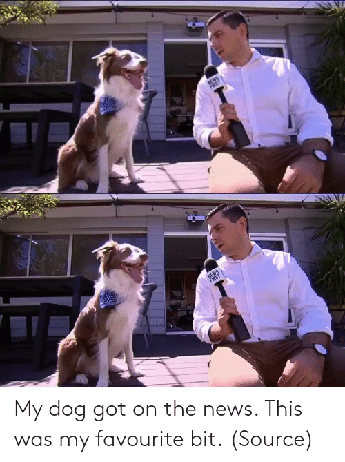The News: My dog got on the news. This was my favourite bit. (Source)