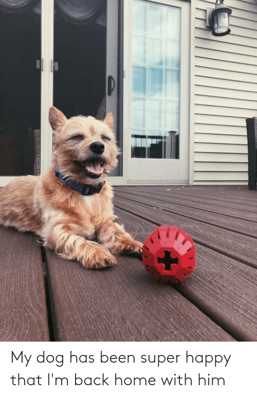 Aww Memes: My dog has been super happy that l'm back home with him
