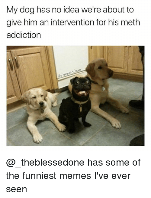 Funny, Memes, and Girl Memes: My dog has no idea we're about to  give him an intervention for his meth  addiction  @Frien @_theblessedone has some of the funniest memes I've ever seen