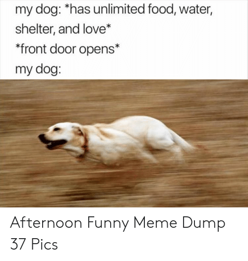 Dog Has: my dog: *has unlimited food, water,  shelter, and love*  front door opens*  my dog: Afternoon Funny Meme Dump 37 Pics