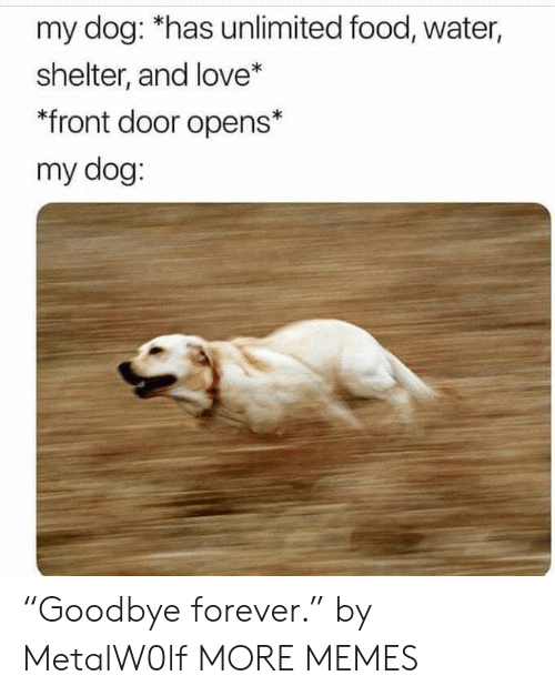 "Dog Has: my dog: *has unlimited food, water,  shelter, and love*  *front door opens*  my dog: ""Goodbye forever."" by MetalW0lf MORE MEMES"