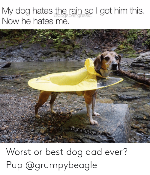 Dad, Instagram, and Target: My dog hates the rain so I got him this.  Now he hates me  @dogsbeingbasic  @grumpybeagie Worst or best dog dad ever?Pup @grumpybeagle