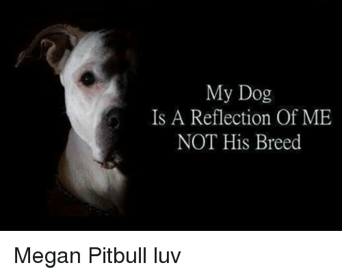 My Dog Is a Reflection of ME NOT His Breed Megan Pitbull Luv | Megan