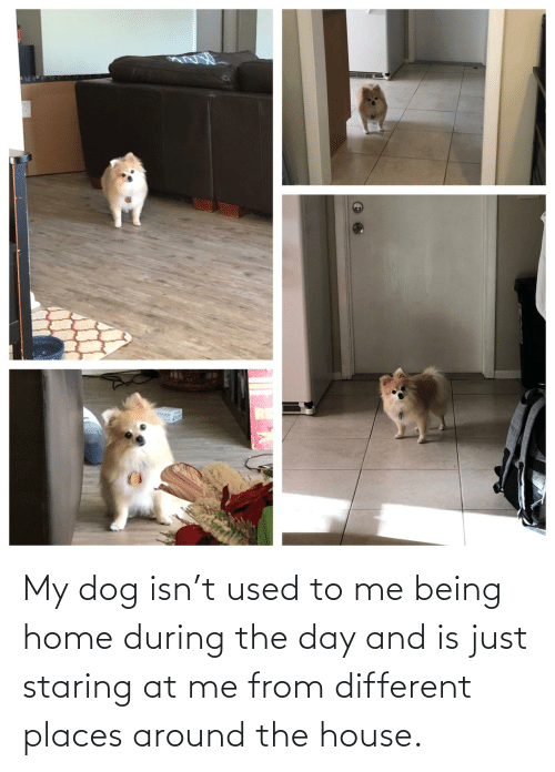 My Dog: My dog isn't used to me being home during the day and is just staring at me from different places around the house.
